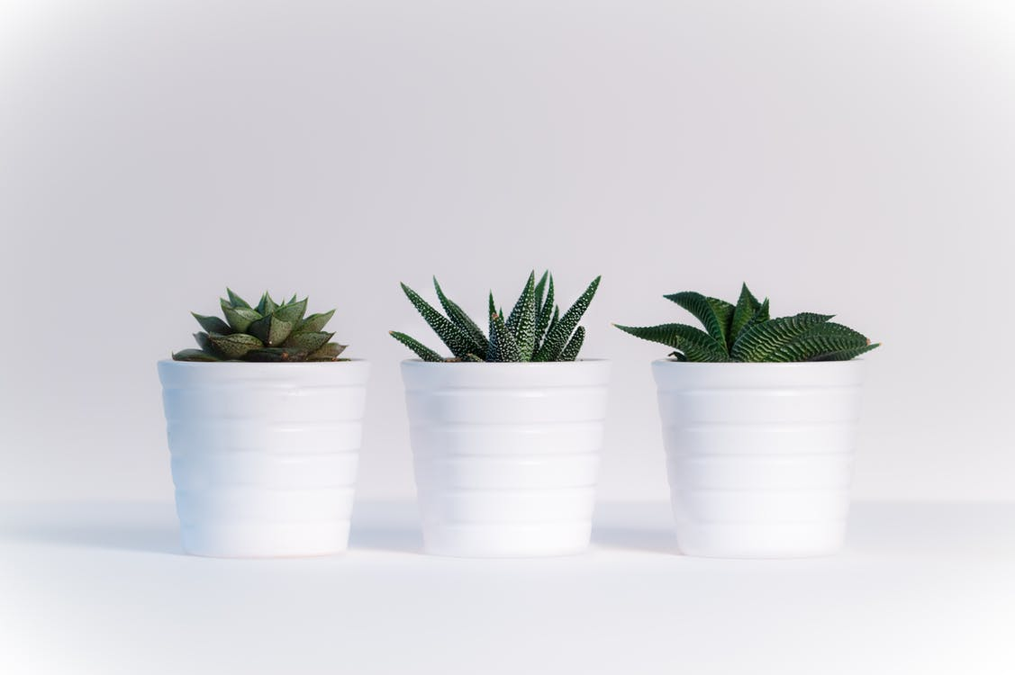 The Do's and Don'ts of Adding Plants to Your Interior Design